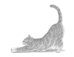 How to Draw a Cat (Stretching)