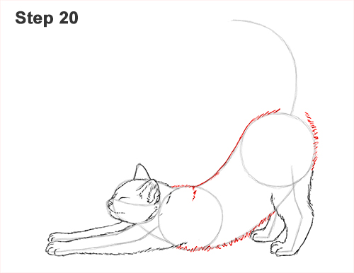 How to Draw a Tabby Kitten Cat Stretching 20