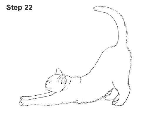 How to Draw a Tabby Kitten Cat Stretching 22