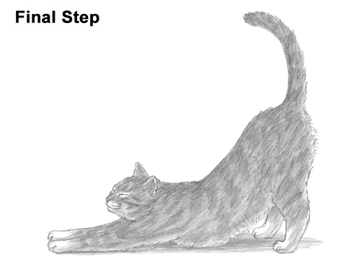 How to Draw a Tabby Kitten Cat Stretching