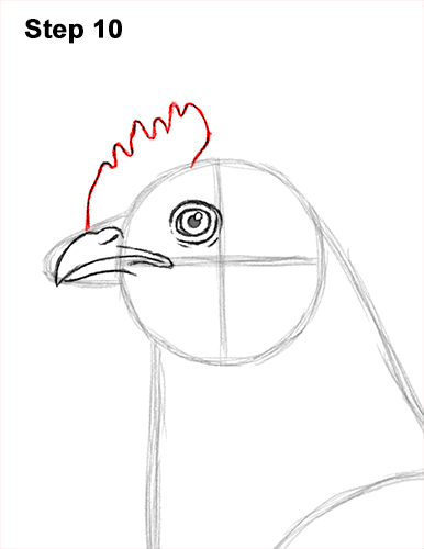 How to Draw a Chicken Hen Bird 10