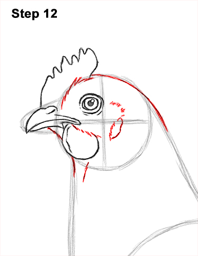 How to Draw a Chicken Hen Bird 12