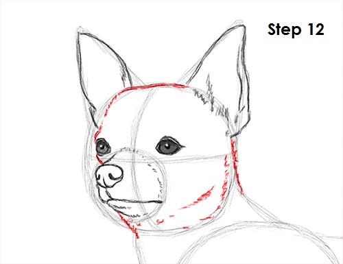 draw chihuahua 12