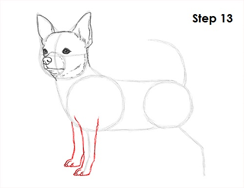 Line Drawing Of A Dog S Face : How to draw a chihuahua
