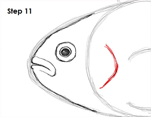 Draw Clownfish 11