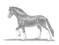 How to Draw a Horse Clydesdale Shire