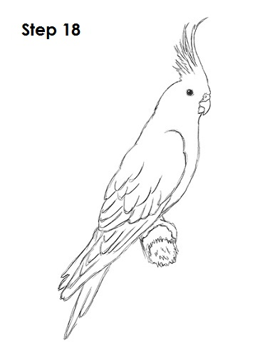 Draw a Cockatiel 18
