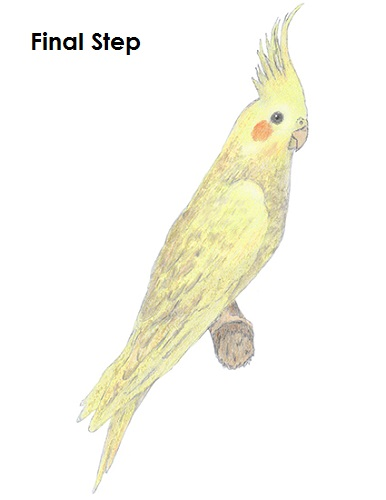 Draw a Cockatiel