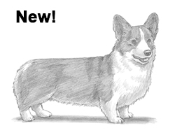 Draw a Welsh Corgi Dog