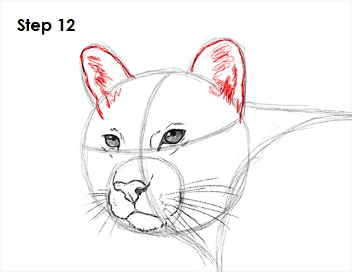 Draw Cougar Cat 12