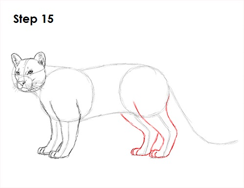 draw cougar cat 15