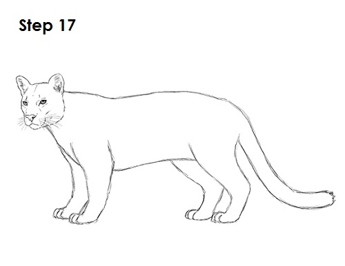 draw cougar cat 17