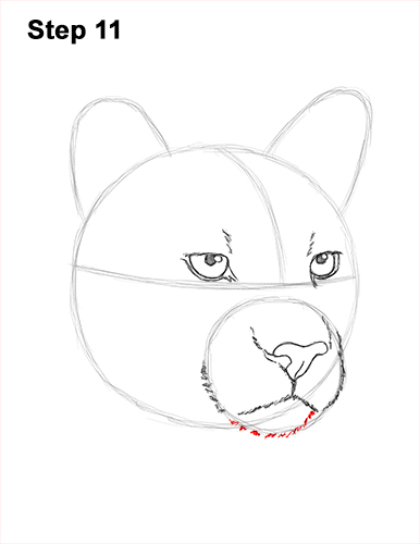 How to Draw a Cougar Mountain Lion Puma Panther Head 11