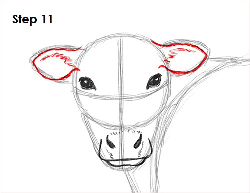 Draw Cow 11