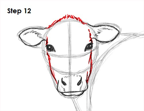 Line Drawing Cow Face : How to draw a cow