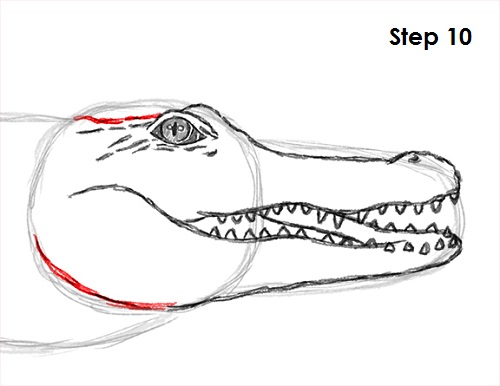 Draw Crocodile 10