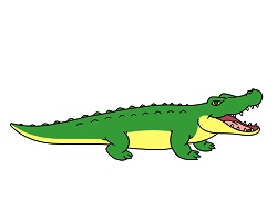 How to Draw a Crocodile Alligator Cartoon