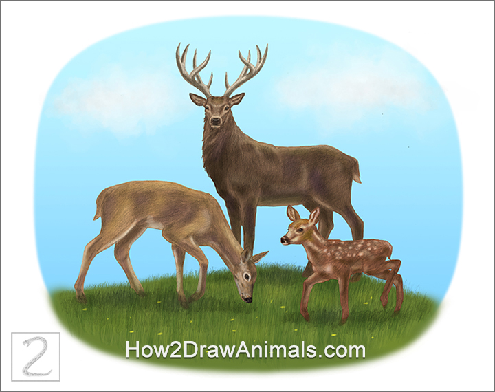 Special Deer Family Drawing Color