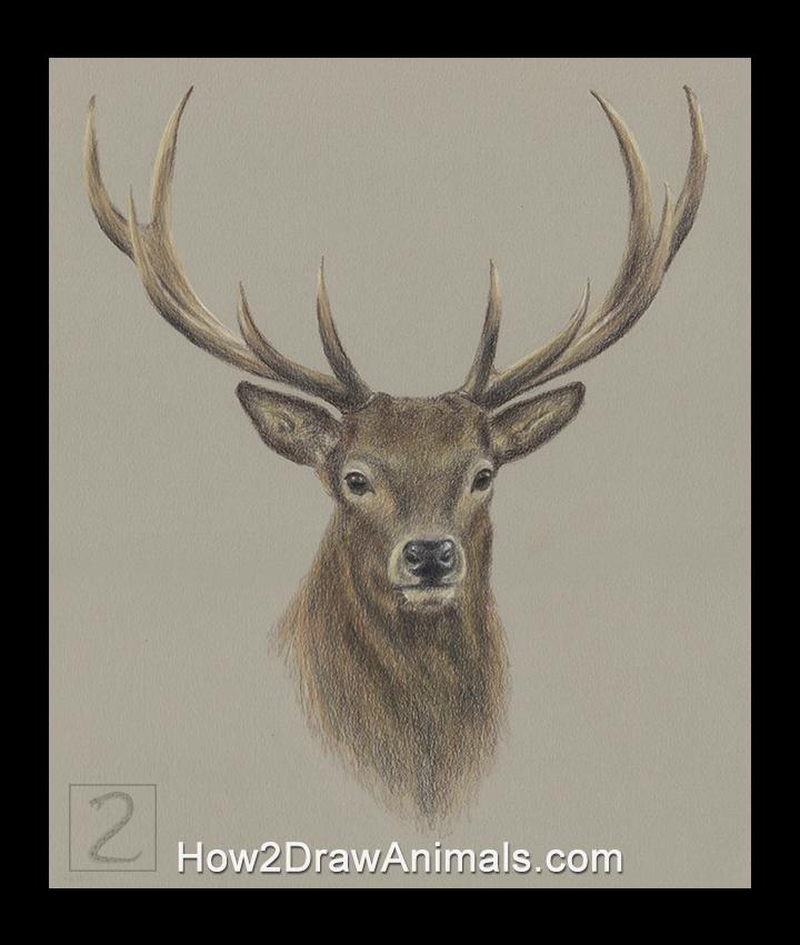 special deer portrait drawing