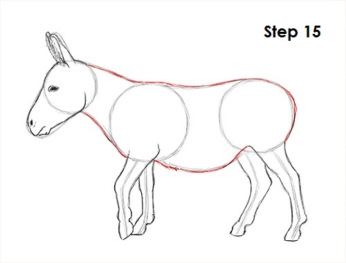 Line Drawing Donkey : How to draw a donkey