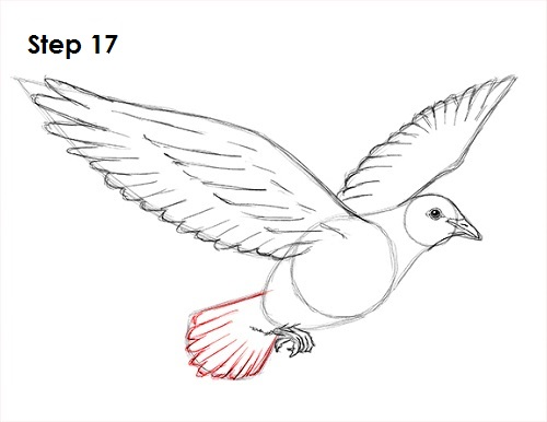 Line Drawing Dove : Dove bird drawing