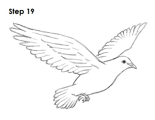 Line Drawing Dove : Dove line drawing