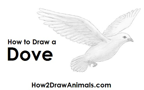 please pause the how to draw a dove video after each step to draw at your own pace