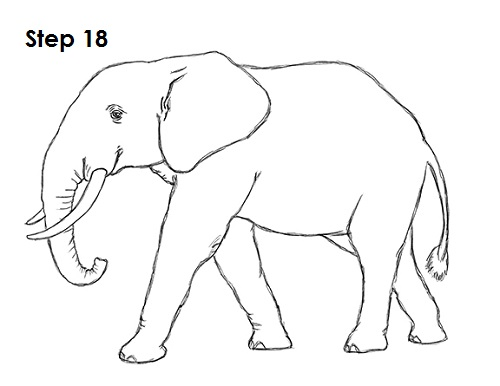 how to draw elephant trunk