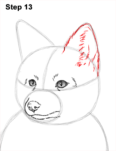 How to Draw a Red Fox Sitting 13