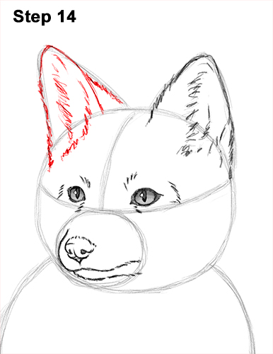 How to Draw a Red Fox Sitting 14