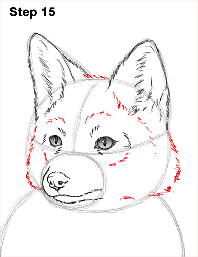 How to Draw a Red Fox Sitting 15