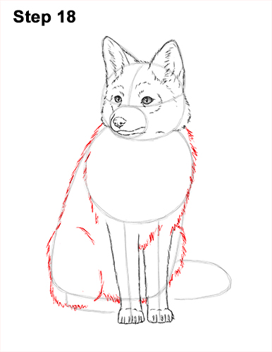 How to Draw a Red Fox Sitting 18