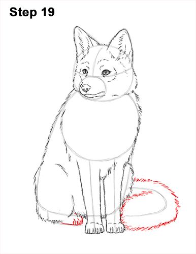 How to Draw a Red Fox Sitting 19