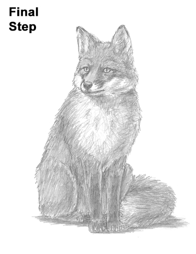How to Draw a Red Fox Sitting