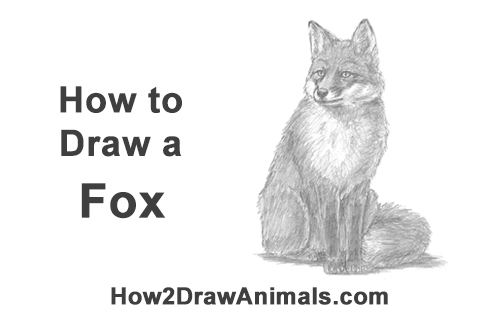 how to draw a fox sitting