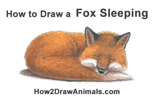 How to Draw Cute Red Fox Sleeping Asleep
