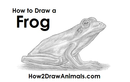 Draw Frog