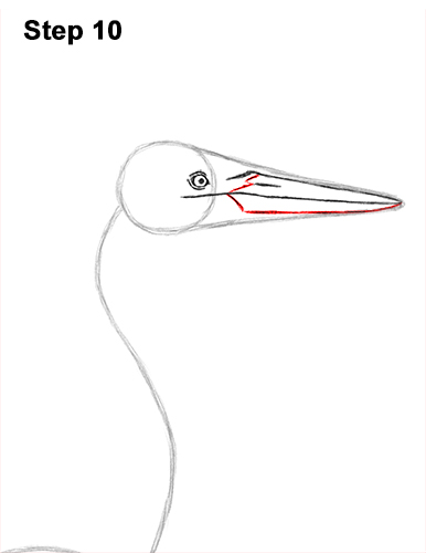 How to Draw Great Blue Heron Bird 10