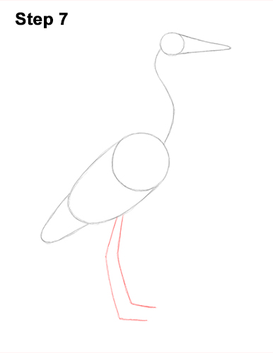 How to Draw Great Blue Heron Bird 7