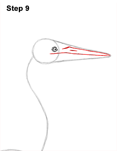 How to Draw Great Blue Heron Bird 9