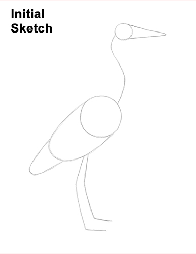 How to Draw Great Blue Heron Bird Guidelines