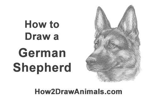 How To Draw A German Shepherd Video Step By Step Pictures