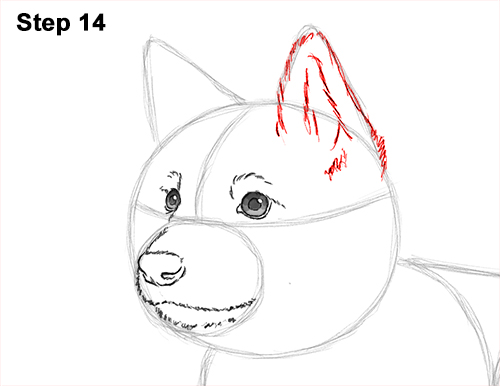 How to Draw a Cute German Shepherd Puppy Dog 14