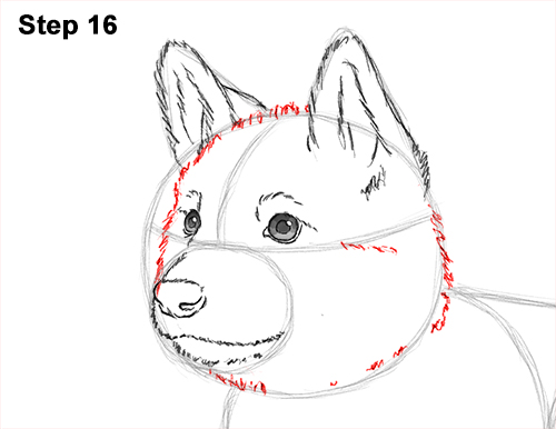 How to Draw a Cute German Shepherd Puppy Dog 16