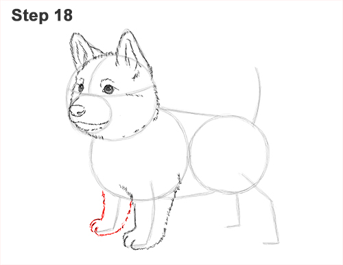 How to Draw a Cute German Shepherd Puppy Dog 18