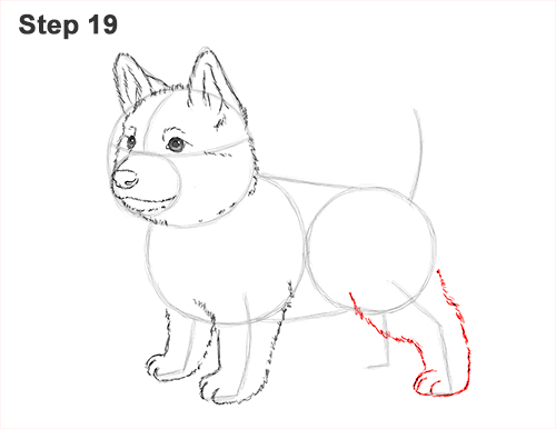 How to Draw a Cute German Shepherd Puppy Dog 19