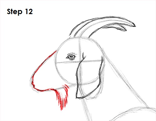 How to Draw a Goat Goat Face Side Drawing