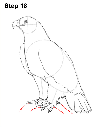 Draw Golden Eagle Bird 18