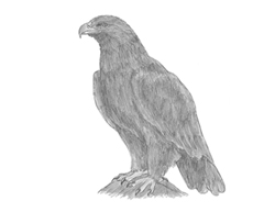How to Draw a Golden Eagle