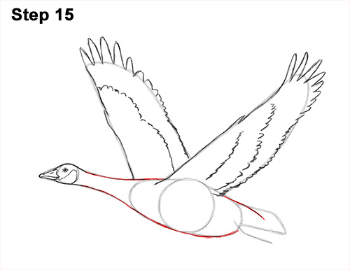 How to Draw Canadian Goose Flying Wings 15